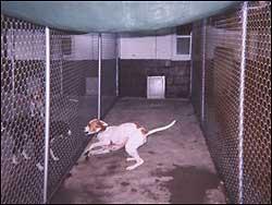 Wittenhaus Dog Boarding Kennels In West Milford Nj